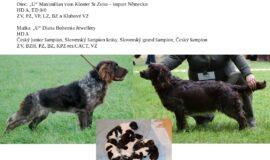 Německý křepelák-štěně